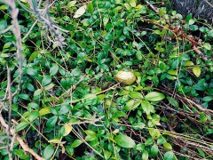 Spotted: Golden egg!